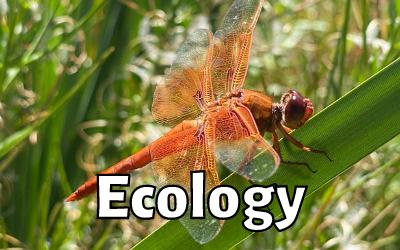 Ep. 4: Marianne Denton – Aquatic Ecologist