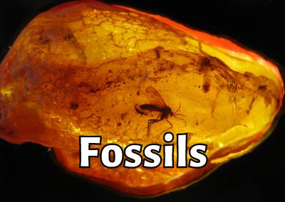 Ep. 9: Yinan Wang – Mineral and Fossil Expert