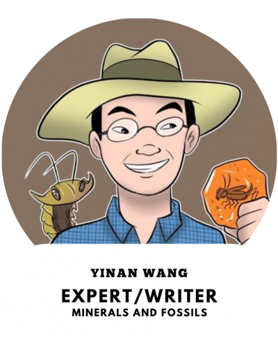 Yinan Wang - Fossil and Minerals Expert
