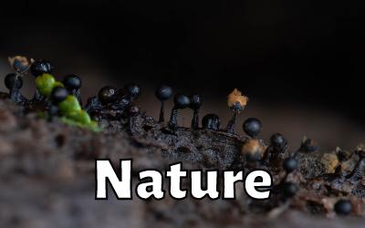 Ep 1: Kelly Brenner (Naturalist)