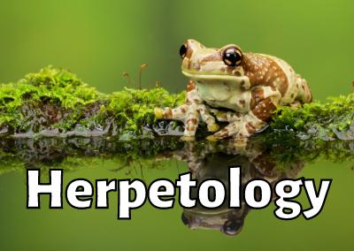 Ep. 17: Steve Allain (Herpetologist)